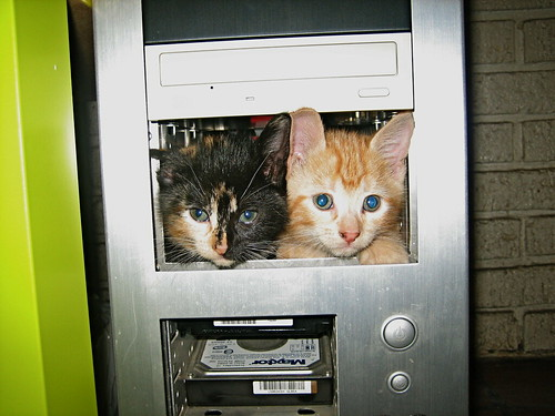kittens in computer