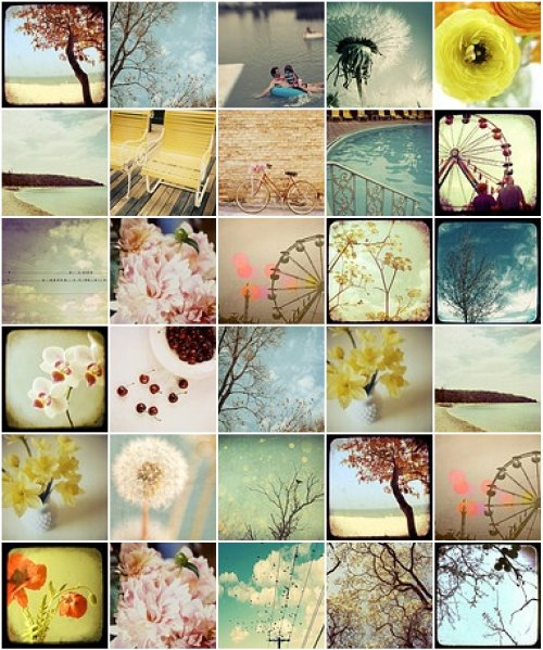 bloomgrowlove