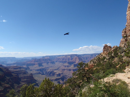 Bird at Grand Canyon
