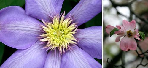 2.Flowers-2