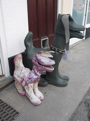 Wellington Dogs in Padstow, Cornwall (dullhunk) Tags: dog boots wellington wellies padstow kernow