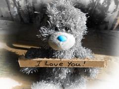 """Teddy bear """"I love you"""" (Lost-Star) Tags: cute love teddy sweet teddybear iloveyou bluenoseteddybear"""
