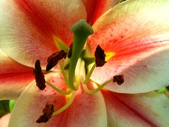 Close and Personal (Stanley Zimny (Thank You for 20 Million views)) Tags: pink flowers flower macro nature colors peach naturesfinest grouptripod