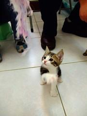 Nana's babies [Day 53] (Chrischang) Tags: pet animal cat 貓 banban 斑斑 kissablekat goldstaraward 20080228 nanababyday53