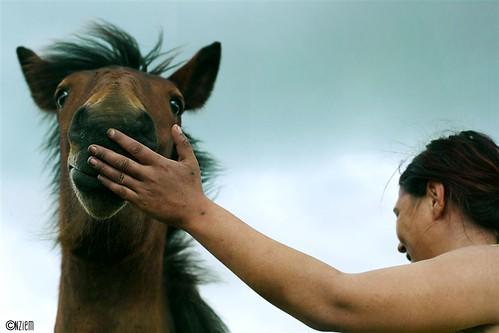 chevaux13