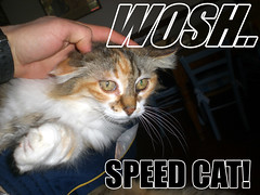 Speed Cat (*Tom [luckytom] ) Tags: boy music brown white black green tom speed cat interestingness eyes woosh lol jerry greeneyes mostinteresting purr merry gatto rapido theboy pur enrico lerry velocit micio micia gatta wooosh ctm veloce themusic rapida wosh lolcat enri favcol errico musicboy erri luckytom themusicboy