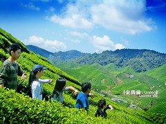 (tpkomodo) Tags: green nature highland uphill cameronhighland
