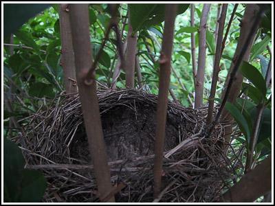 Nest copy