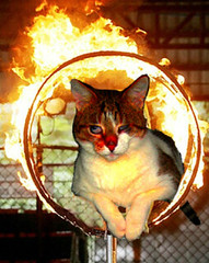 Solimano nel cerchio infuocato