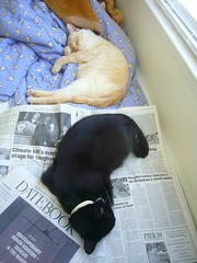reading tires em out (wescoasia) Tags: sleeping cats reading mimi saturn pookie datebook