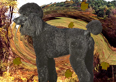 Whispering Leaves (ebonique2007) Tags: dog black photoshop blackdog poodle bestinshow standardpoodle ebbie flickrsbest bej blackstandardpoodle mywinners flickrdiamond goldsealofqualityaward finephotoshopdesign