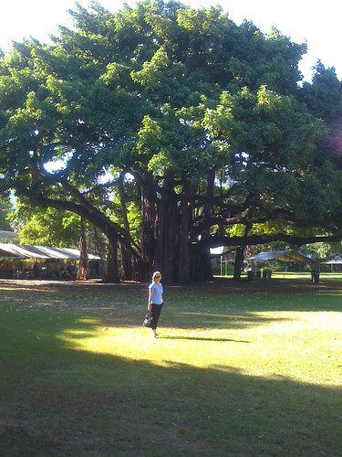 Me and the Banyan Tree