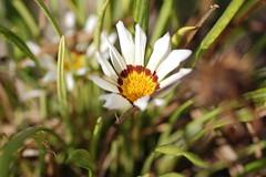 dsc_1831.jpg (Chris Sykes) Tags: spain floraandfauna export