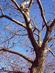 Shady Tree (Old Top 40 DJ) Tags: tree slidr