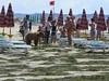 Sad trained bears entertain touris…