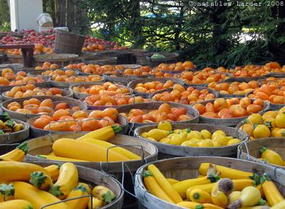 Gills tomatoes