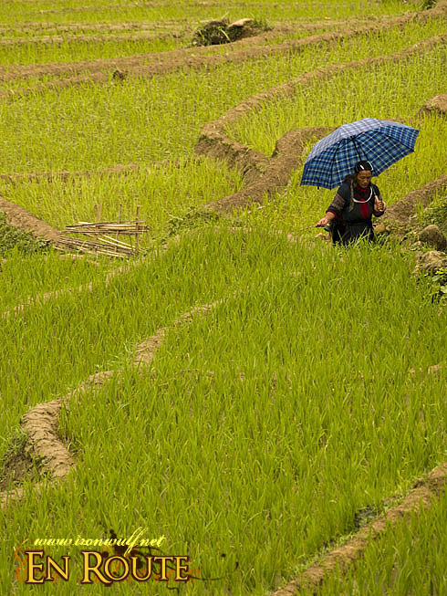 Hmong traversing the Terraces