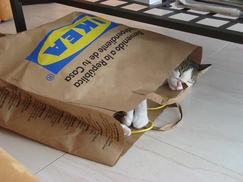 IKEA´S CAT