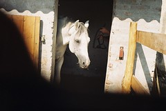 kinz a l (.e.e.e.) Tags: horse film animal analog vintage hungary rangefinder scan soviet fed2 mf analogue russian fed manualfocus rf kodacolor filmscan industar baranya leicacopy pityu aplusphoto beremend shagia