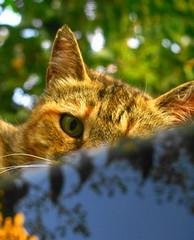 cat's eyes (Scorpocat) Tags: cat kat chat gato katze gatto kedi katt kissa