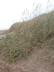 Dune succession