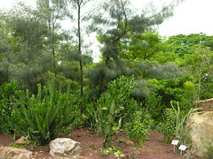 Singha Pura 2008-2430 (Tai Pan of HK) Tags: singapore botanicalgarden botanicgardens singapura gardencity reddot singaporeisland lioncity republiksingapura littlereddot singhapura pulauujong republiofsingapore