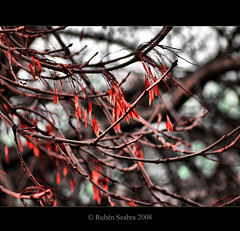 HDR - FALL (*atrium09) Tags: travel autumn dublin fall otoño hdr naturesfinest atrium09 mywinners rubenseabra