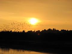 Sun - Zon - Opgaand en Ondergaand (Marianne de Wit) Tags: dutch landscape lek boven nationalparkdehogeveluwe spreeuwen nederlandselandschappen