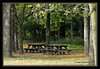 End of the picnic season... (Blue-Sky Pink) Tags: statepark autumn fall indiana tables d300 fineartphotos anawesomeshot imagesbytakache