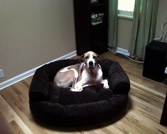 Pella's New Couch