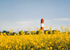 Lighthouse surrounded by Rape - Gelting, Germany (Batikart ... handicapped ... sorry for no comments) Tags: travel blue red vacation sky lighthouse white rot field yellow architecture germany landscape geotagged deutschland spring flora holidays europa europe urlaub feld himmel f100 bluesky rape gelb architektur geology blau landschaft weiss blauerhimmel vacanze schleswigholstein conservationarea naturschutzgebiet colza geologie frhjahr leuchturm coleseed 100faves 201205 rapsblte olympusslr 35faves passionphotography flensburgerfrde viewonblack gelting geltingerbirk colorphotoaward nieby theunforgettablepictures batikart falshft flensburgfjord conola saariysqualitypictures landschaftangeln