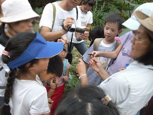 你拍攝的 16觀察台北樹蛙與牛蛙。