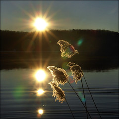 Sunrise Reflection (4+4 in 6x6) (NaPix -- (Time out)) Tags: morning sun lake canada reflection nature start sunrise landscape hope gold quebec ngc story flare sillouette info flair tms laurentian lakescape lifestory tellmeastory firstquality imagepoetry explore1 napix