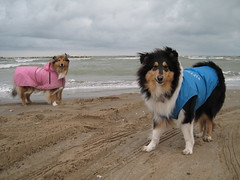 Stormy (Hermio-Black) Tags: sea dog pet pets beach dogs nature wet rain clouds canon collie candy cloudy rough raincoat lassie collies