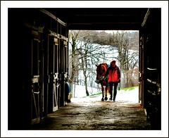Sanctuary (Images by A.J.) Tags: winter horses horse woman snow english female barn cheval women ride pennsylvania snowy farm pa chestnut jumper hunter rider stable equestrian thoroughbred equine fallowfield dressage gelding lpwood