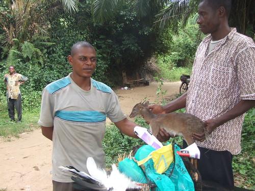seizing bushmeat and chickens alike