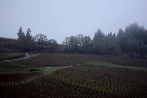 misty vineyards