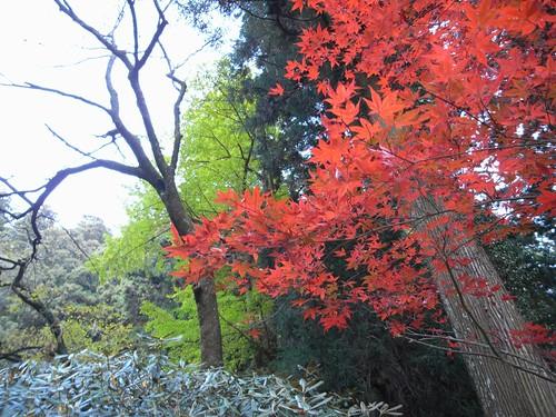 室生寺(2008紅葉)-05