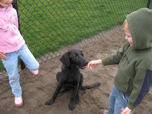 'Picking up Lucy at the dog park in Portland' from the web at 'http://farm4.static.flickr.com/3066/3108227414_1f5ca0f67c.jpg'