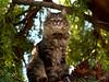 Tiger Tree King (joecrowaz) Tags: cats pets nature otw mywinners bestofcats kittyschoice catmoments alittlebeauty oscarsurrealleous