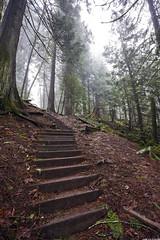 (Kai Fuglem) Tags: park trees mist canada nature fog forest long exposure bc angle wide victoria goldstream