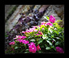 Never felt...! [explored] (e.nhan) Tags: pink flowers light flower art nature leaves closeup landscape spring colorful colours dof bokeh arts backlighting enhan