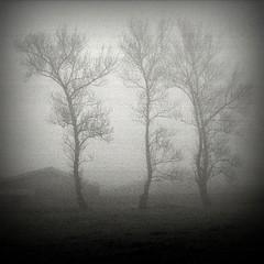 Mystery Island (filipe franco) Tags: trees tree fog analog landscape analógica nebel paisagem kodakbw400cn nebbia fotoblog árvore niebla dimma nevoeiro canoneos300 туман