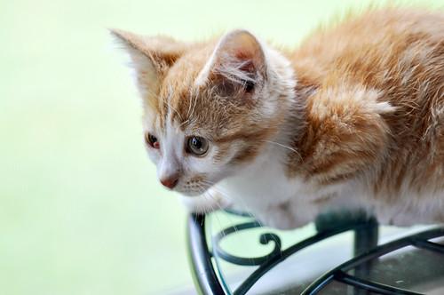 06/12/11 kitten rescued from window well