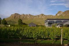 IMGP2630 (Jamie Goode) Tags: newzealand wine hawkesbay