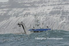 Hrafn Sveinbjarnar  ldudal (Bergthor) Tags: ocean blue winter sea fish storm nature weather island boat iceland fishing fisherman nikon europe sailing ship fishermen wave gale crew maritime seafood catch nikkor skip trawler sland towing btur bestshot seamen togari d300 seawater seaman fisheries trawl fishingship 66n fishprocessing fishingindustry shipinstorm n66 icelandicship anawesomeshot fishcatch stronggale icelandicships sjmaur shipphotos oceantrawler trawlerdoor icelandiccoast skipamyndir sjmannalmanak shipsphoto sjmannaalmanak bestumyndirnar icelandfishingboat icelandicfishingboats trawlerinstorm icelandicfishery icelandicfishingships icelandictrawler fishingtrawlerinbadweather shipsequipment oceantrawlers shipinstormyseas shipsinbadweather hrafnsveinbjarnarsongk255 shipfishinginiceland bergrgunnlaugsson bergthorgunnlaugsson