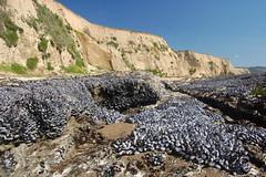 20080316 Mussel Beach