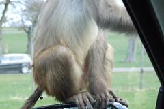 Longleat Safari Park #28