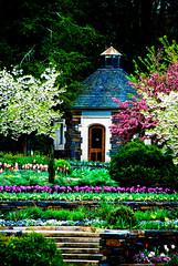 Garden House (southpaw20) Tags: flowers green st durham purple tulips northcarolina group1 sarahpdukegardens nikond80 southpaw20 nikkor18135mmf3556dx