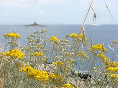 Yellow and blue / uto i modro (Vjekoslav1) Tags: flowers blue sea lighthouse colors yellow island bees may croatia insects more seashore hvar hrvatska otok obala naturesfinest boje cvijee plavo kukci svjetionik uto platinumphoto pele svibanj thebestofday gnneniyisi